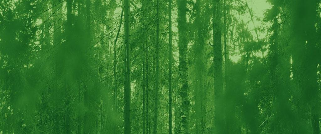 kasvihuonekaasut ja ympäristö